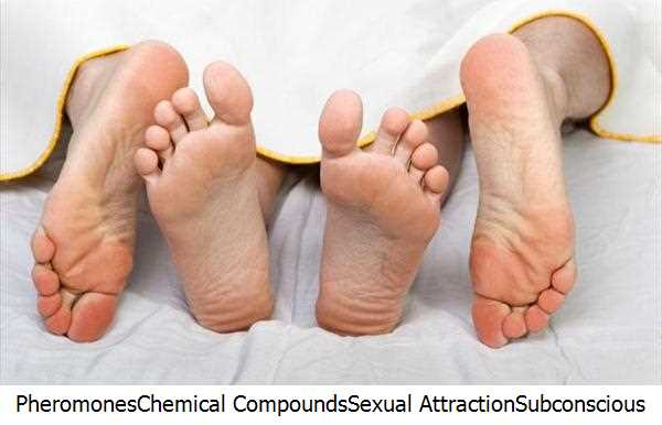 Pheromones,Chemical Compounds,Sexual Attraction,Subconscious Level,Women Attracting Pheromones,Pheromones Products,Male Pheromone,Attract Women,Sex Pheromones,Women Attracting,Human Pheromones