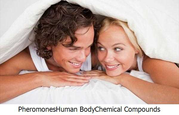 Pheromones,Human Body,Chemical Compounds