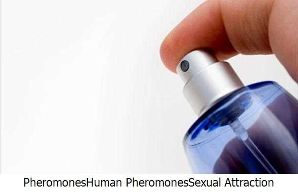 Pheromones,Human Pheromones,Sexual Attraction