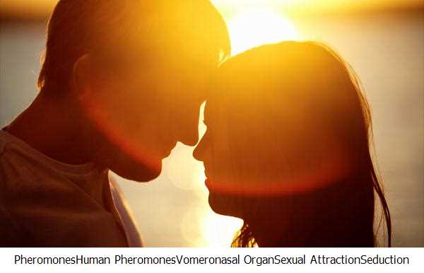 Pheromones,Human Pheromones,Vomeronasal Organ,Sexual Attraction,Seduction